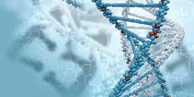 اعلام آمادگی موسسه رازی برای همکاری در تشکیل شبکه ملی زیست بانک ذخایر ژنتیکی کشور