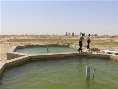 آغاز تجربه زندگی ماهی «باس دریایی» در آبهای نامتعارف خرمشهر