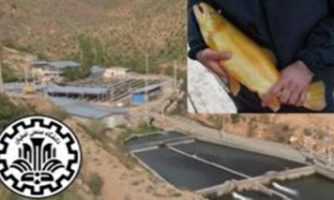 تولید تخم تک جنسی ماهی قزل آلای رنگین کمان برای نخستین بار در کشور