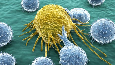 با تلاش محققان کشور صورت گرفت: نابودی سلولهای سرطانی با نانوذرات پلیمر و طلا