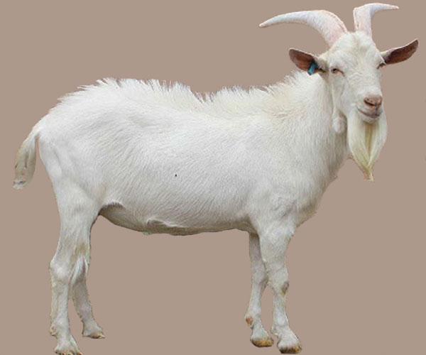 انجماد اسپرم حیوانات نادر در اصفهان
