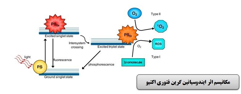 روش جدید محققان دانشگاهی برای مهار ژنهای عامل تشکیل بیوفیلم در باکتری عفونتهای بیمارستانی