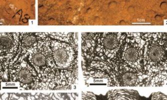 کشف دو گونه فسیل مرجانی جدید با همکاری دیرینه شناسان ایران و چین