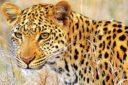 آمادگی پژوهشگاه بیوتکنولوژی کشاورزی در کمک به حفظ گونه های در معرض انقراض