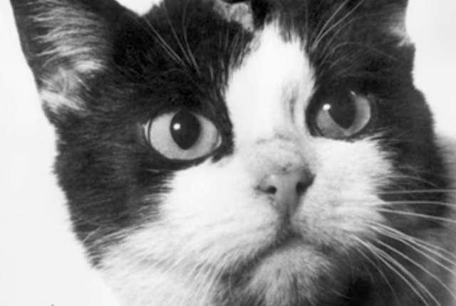 سرنوشت شوم تنها گربه فضانورد!