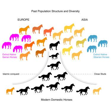 براساس پژوهشی بین المللی در ۱۹ کشور جهان: خاستگاه بسیاری از اسبهای اروپا و آسیای مرکزی، شمال شرق ایران است