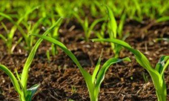 شناسایی باکتری بومی با قابلیت افزایش مقاومت گیاهان به شوری