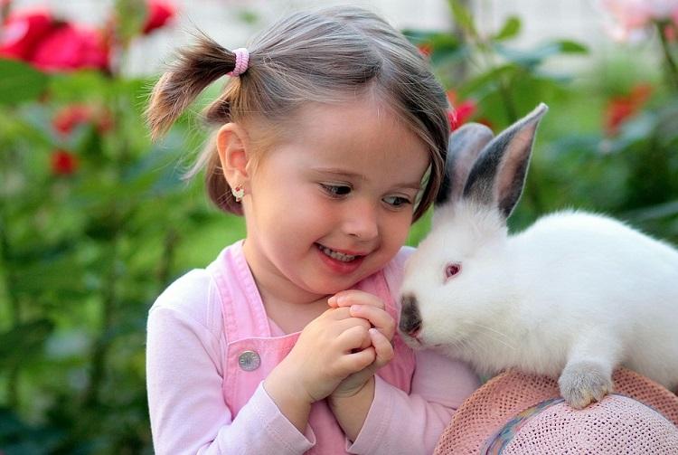 یافته هشداردهنده محققان ایرانی: کشف نوعی آلودگی تک یاخته ای مشترک بین انسان و خرگوش در کشور