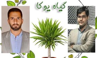 مخترعان ایرانی با گل های زنگوله ای به جنگ آلودگی صوتی آمدند