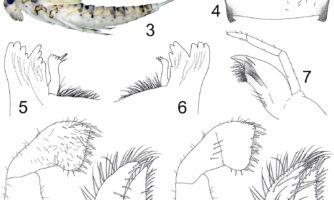 شناسایی ۱۸ گونه جدید از حشرات آبزی ایران