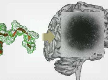 در مجله نیچر ارائه شد: دستاورد محققان ایرانی در دارورسانی به مغز با عبور از سد خونی مغزی