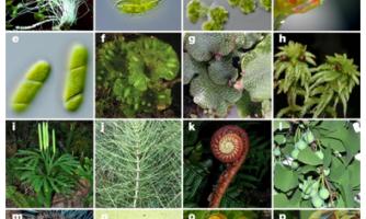 کاملترین درخت تکاملی گیاهان سبز ترسیم شد/رد فرضیه مشهور بنیان تغییرات ژنتیکی در تکامل گیاهان  با مشارکت دو محقق ایرانی