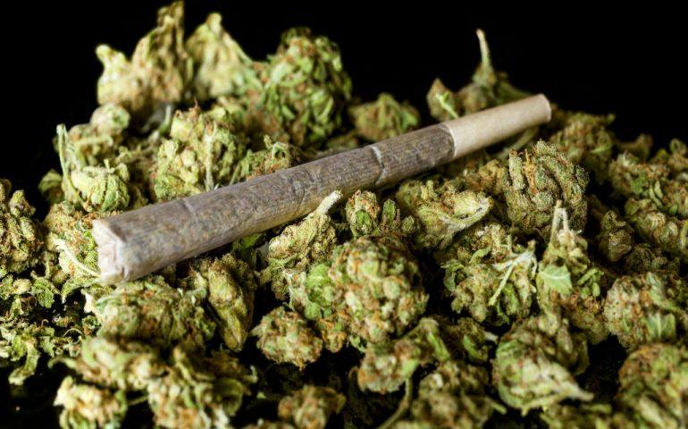 اطلاعیه مرجع ملی ایمنی زیستی درباره مخدر «گل»