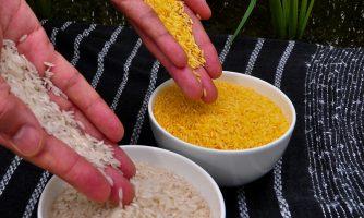 مجوز ایمنی زیستی برنج طلایی برای مصرف خوراکی انسان صادر شد