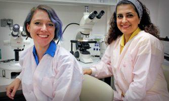 تبدیل پشه های ماده به پشه های نر غیربیماری زا با همکاری محقق ایرانی