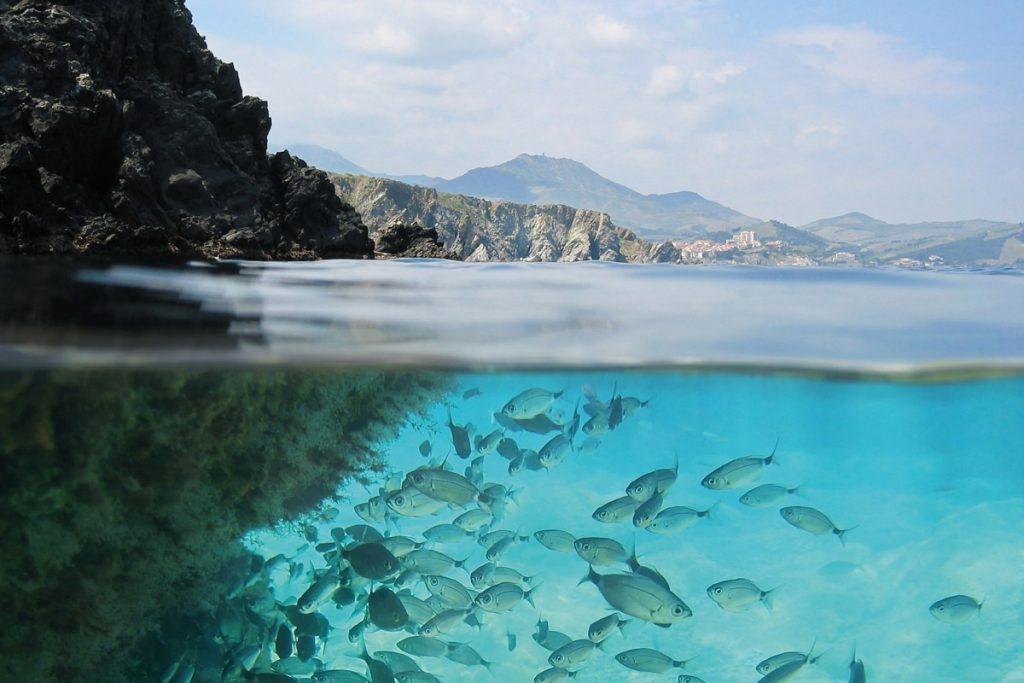 افقی تازه در تولید سوخت پاک هیدروژن از آب دریا