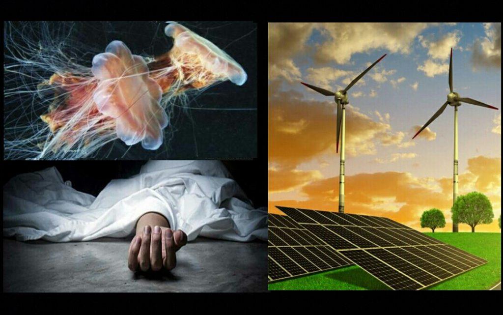 از جسد انسان تا عروس دریایی؛ منابع غیرمعمول تولید انرژی پاک