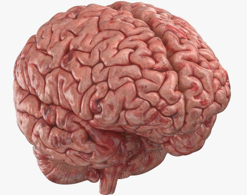 چاقی، میزان ماده خاکستری مغز را کاهش میدهد